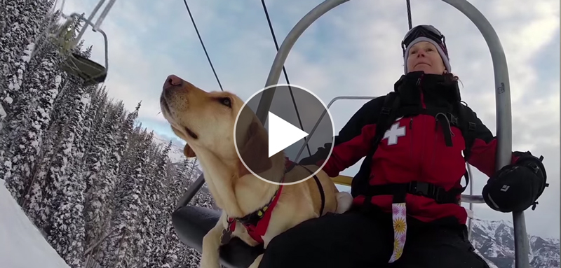 Telluride Avalanche Dogs: Man's Best Friend