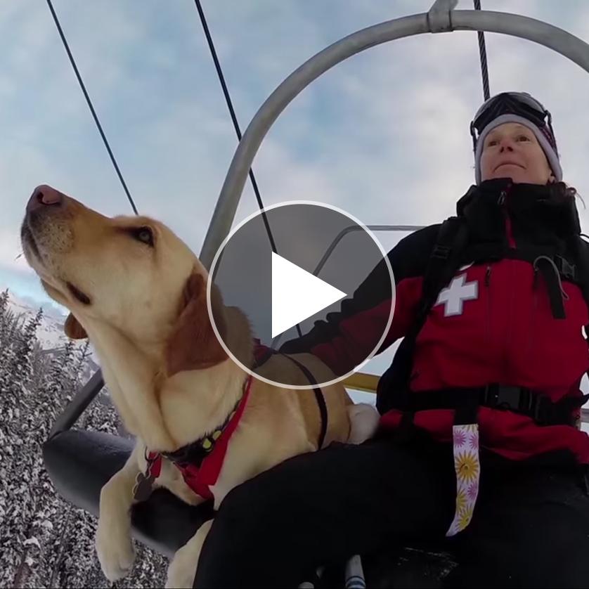 Telluride Avalanche Dogs: Man's Best Friend