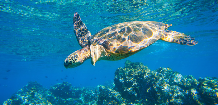 Snorkeling near Kona Town, Hawaii