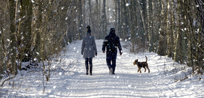 Winter Dog Walking Winners