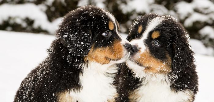 18 Best Winter Dog Breeds