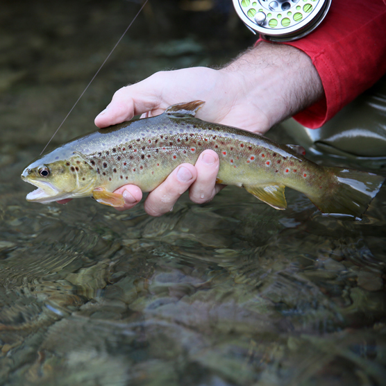 Fly Fishing Guide For Beginners